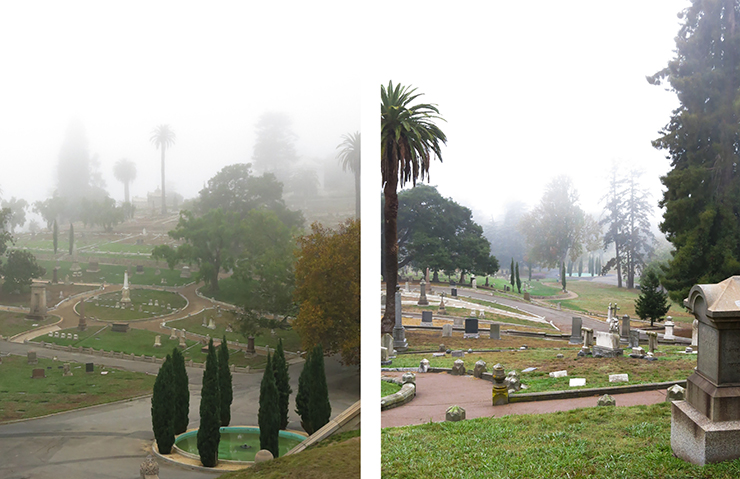 foggy overviews_2_no background