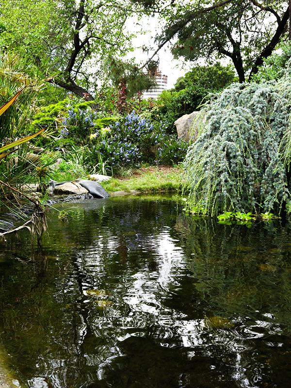 LM Garden 17