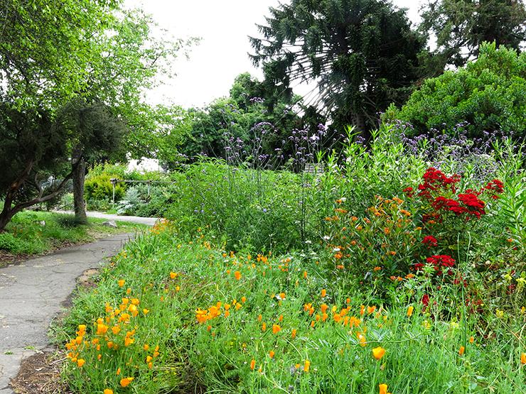 LM Garden 4