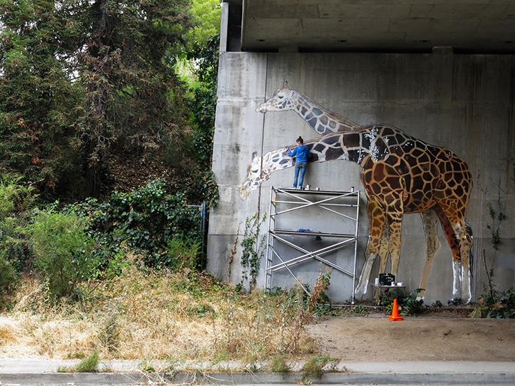 giraffe-13