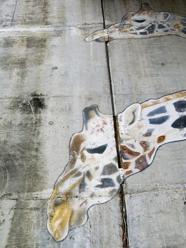 giraffe-8