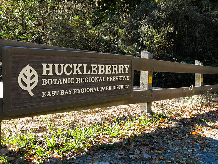 huckleberry-1