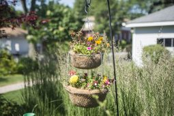 Hanging baskets in the Foster Garden in River Forest. | Alex Rogals/Staff Photographer