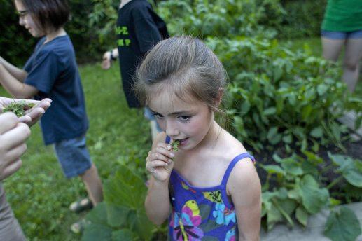 Kate Boveri tastes oregano during a weekly meeting of the Longfellow Garden Club. The club's garden is on this year's Edible Garden Tour. (DAVID PIERINI/Staff Photographer)