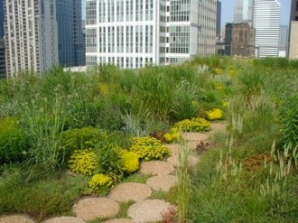 City Hall green roof. Photo courtesy City of Chicago