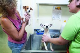 Robin Akers, left, and Gretchen Decker, bathe puppies that were rescued from Hurricane Isaac in Louisiana, at the Animal Care League of Oak Park. Five dogs came from the storm-ravaged state to the ACL shelter in 2012. | FILE
