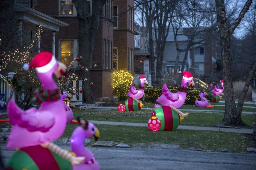 A row of homes on Clinton are seen with inflatable flamingos in their front yards on Thursday, Dec. 17, 2020, in Oak Park, Ill. | ALEX ROGALS/Staff Photographer