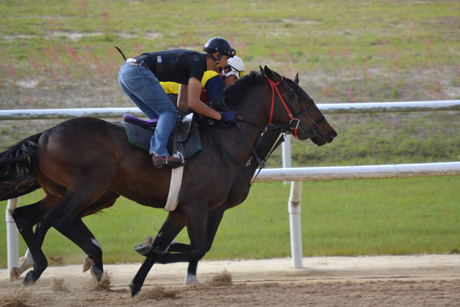Oak-Ridge-Training-Center-racehorses training