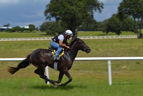 Oak-Ridge-Training-Center-racehorse on turf course