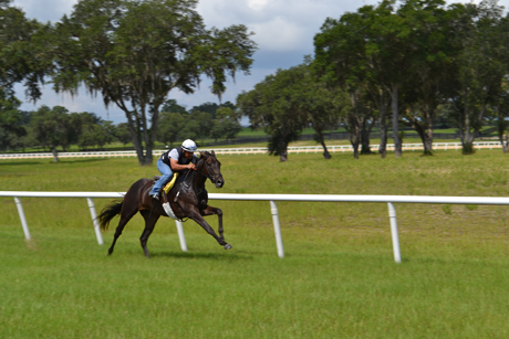 Oak-Ridge-Training-Center-racehorse on turf course