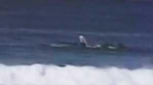Surfista foi atingido por baleia em Bondi Beach.