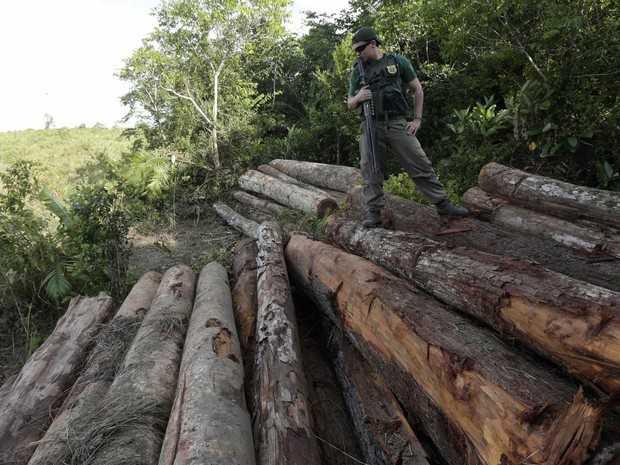 Agente do Ibama inspeciona madeira ilegal apreendida na reserva indígena do Alto Guama, em Nova Esperança do Piriá (PA). Os fotógrafos Nacho Doce e Ricardo Moraes, da Reuters, viajaram pela Amazônia registrando formas de desmatamento. Foto de 26/9/2013. (Foto: Ricardo Moraes/Reuters)