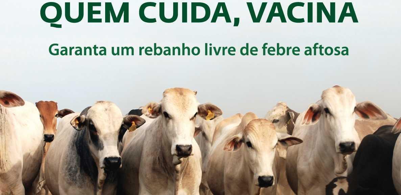 Resultado de imagem para campanha contra a febre aftosa