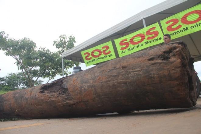 Troncos de árvores foram usados para bloquear a BR por quase 10 horas - foto: Alexandre Lima