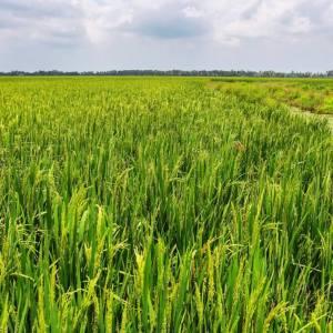 美國農業部強化對印度出口至美國的有機農產品之監督