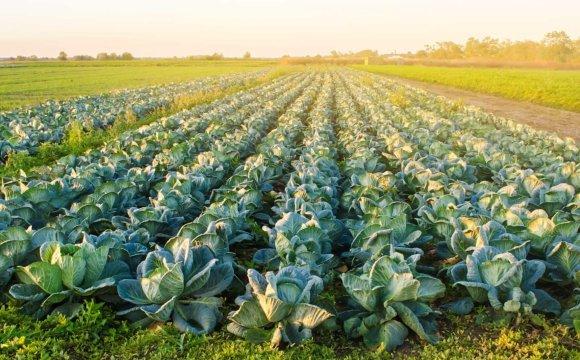 新型木醋液配方應用於蔬菜有機栽培之初步結果