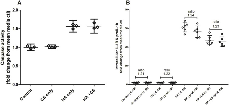 Chondroitin sulphate inhibits NF-κB activity induced by