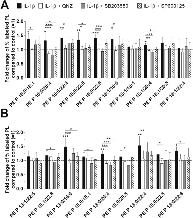 Interleukin-1β affects the phospholipid biosynthesis of