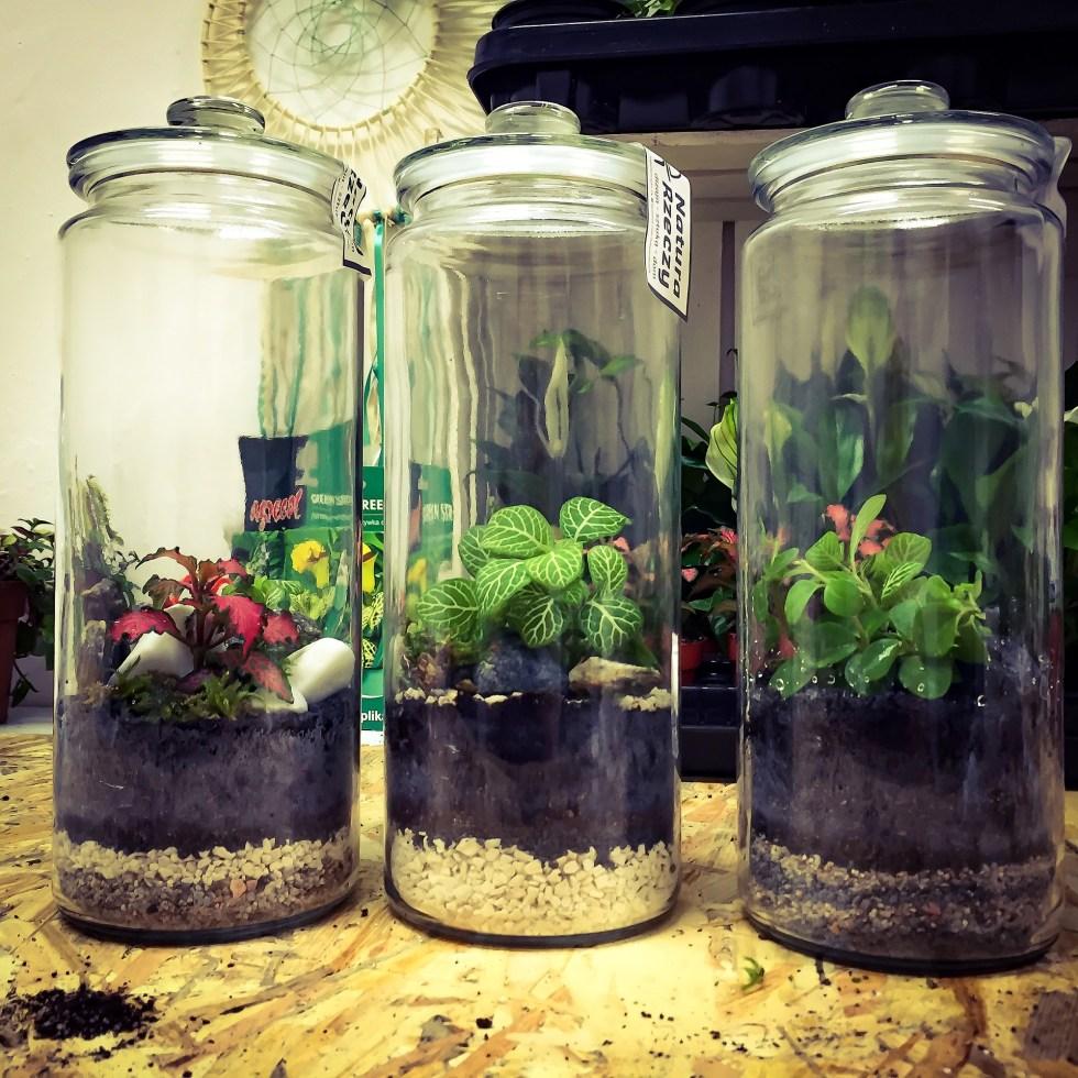 Barattoli con piante