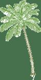 Casa Oasis Troncones logo palm tree line art