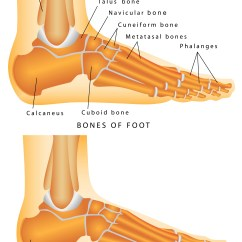Diagram Of Tibia Stress Fracture 3 Phase 208v Motor Wiring Heel Spurs Orthopaedic Associates St Augustine