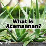 what is acemannan