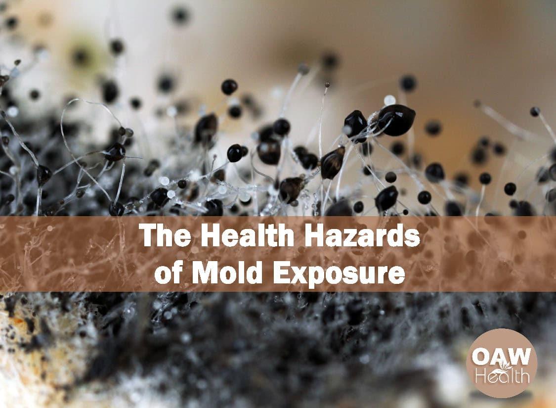 The Health Hazards of Mold Exposure