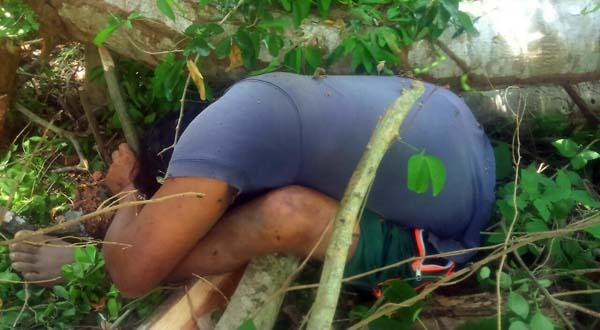 Campesino muere prensado por árbol en Santiago Jamiltepec