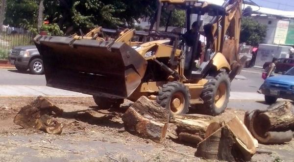 Retiran árbol que obstruye la calle desde hace una semana