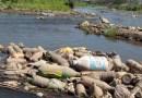 Ríos del Istmo a su máximo nivel de contaminación