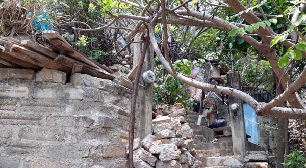 Abejas atacan a familias en Salina Cruz