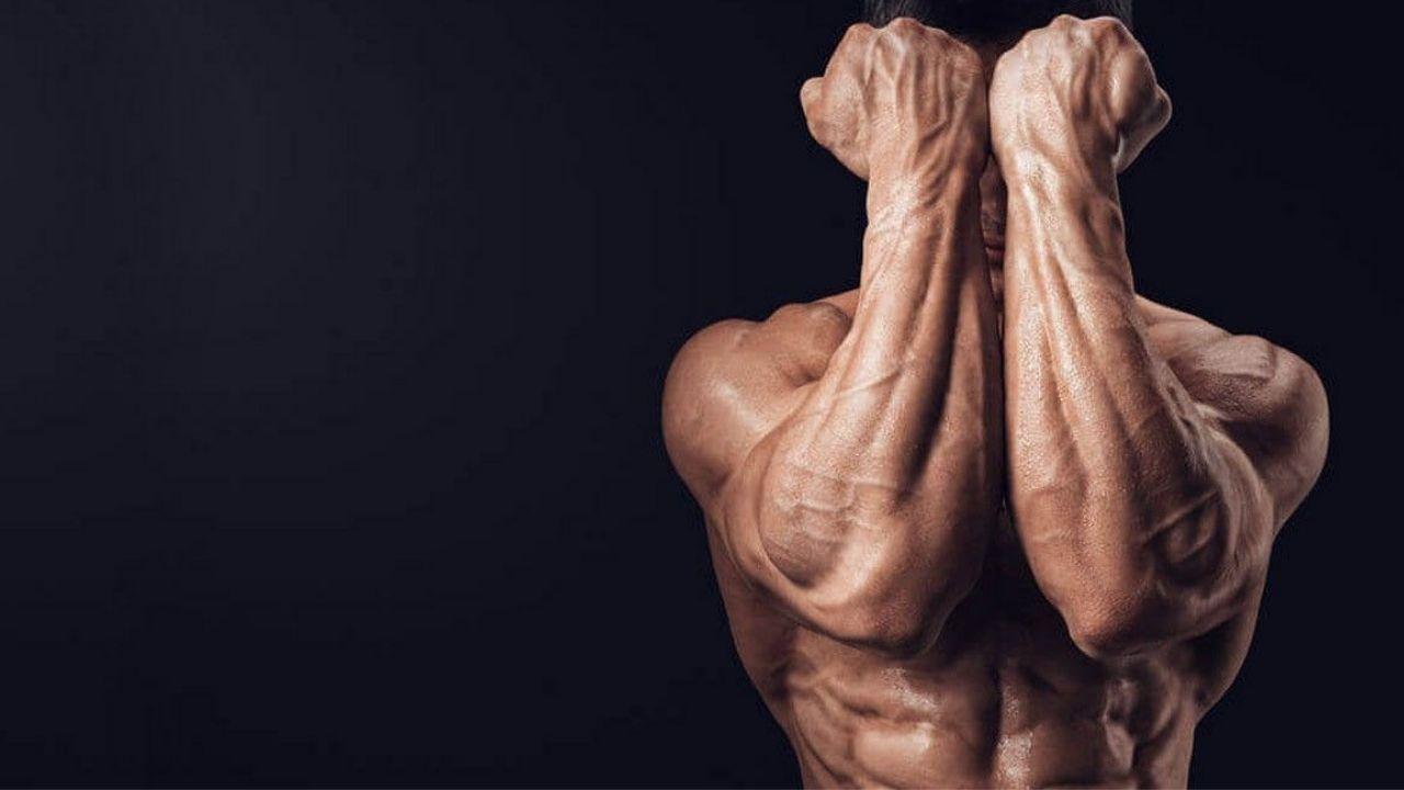 Pembahasan Mengenai Otot Bisep dan Tricep