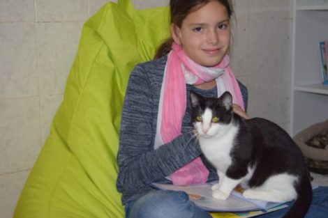 Die Katzen genießen sichtliche die Aufmerksamkeit die ihnen im Katzenlesezimmer zuteil wird. Foto: ls