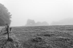 Nebel BW
