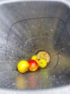 Äpfel 6