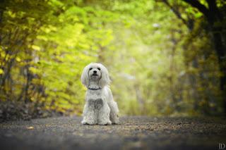 5 psich umiejętności przydatnych do sesji zdjęciowych.