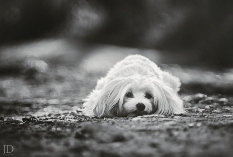 fot. Joanna Dembowska