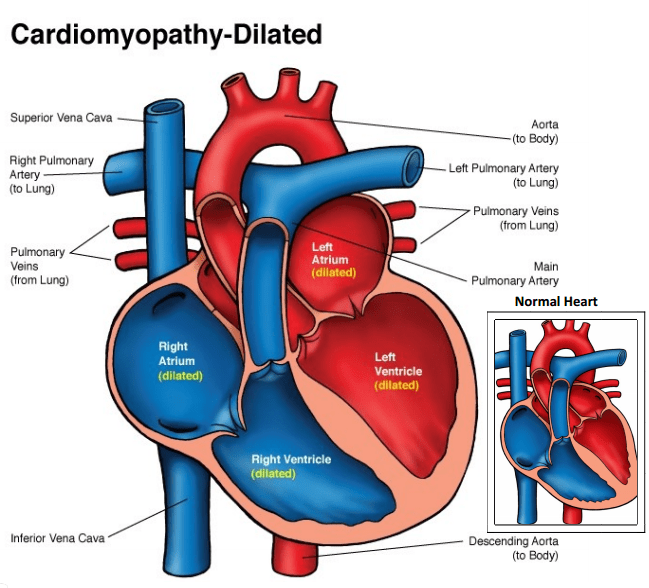 heart anatomy diagram worksheet 2010 silverado radio wiring ob images