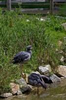 Planète sauvage, chemin de brousse, sentier des incas