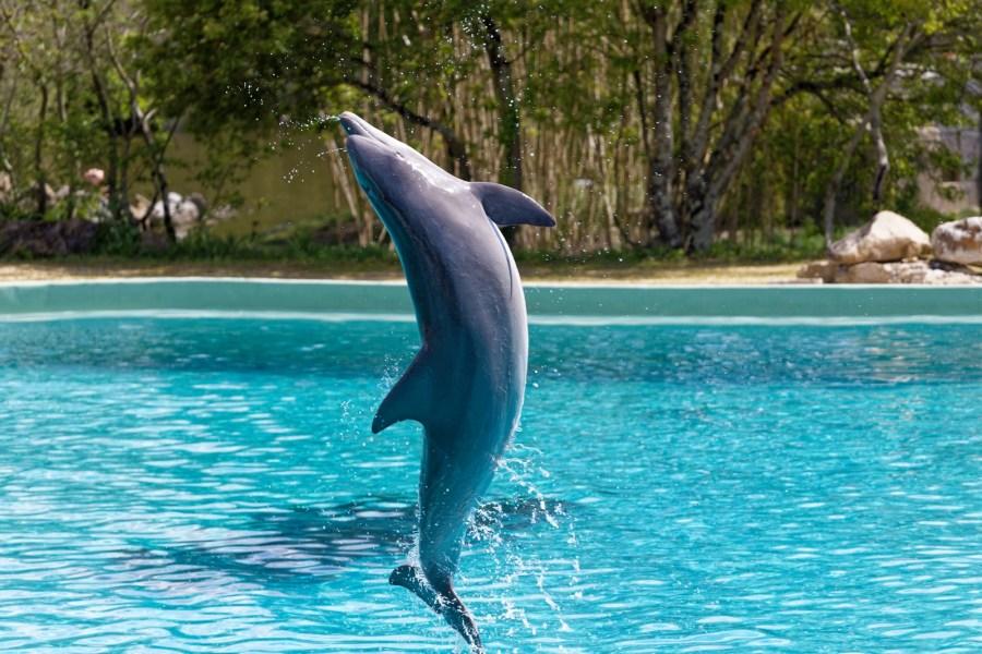 cité marine planète sauvage le spectacle des dauphins