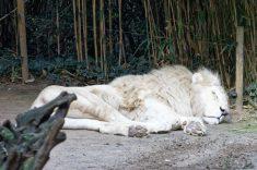 Zoo de la flèche objectif pays de loire56600_DxO