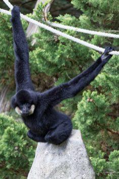 Zoo de la flèche objectif pays de loire56673_DxO