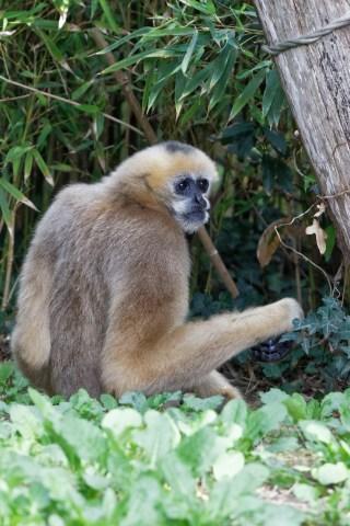 Zoo de la flèche objectif pays de loire56677_DxO