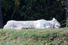Zoo de la flèche objectif pays de loire56701_DxO
