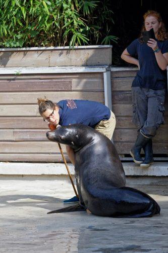 Zoo de la flèche objectif pays de loire56715_DxO