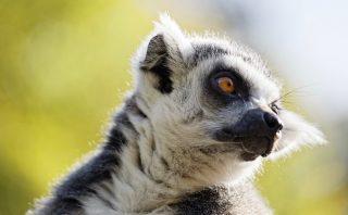 Zoo de la flèche objectif pays de loire56730_DxO