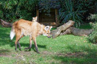 Zoo de la flèche objectif pays de loire56859_DxO