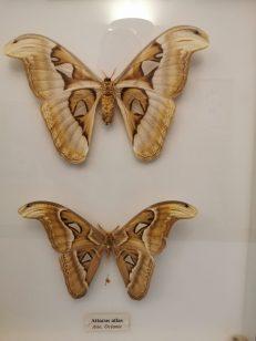 museum des sciences naturelles Angers_152634