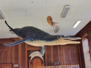 museum des sciences naturelles Angers_155121