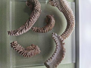 museum des sciences naturelles Angers_155258